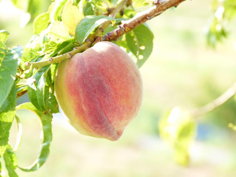 Peach7 2 12CEG